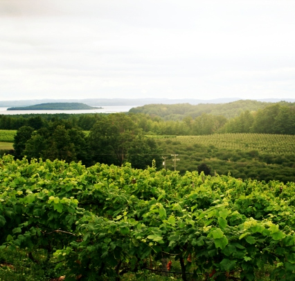 Corked Vineyard